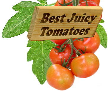 Best-Juicy-Tomatoes for week 26 Story Slam